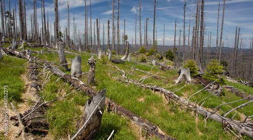 Totholz - Borkenkäfer als Landschaftsgestalter