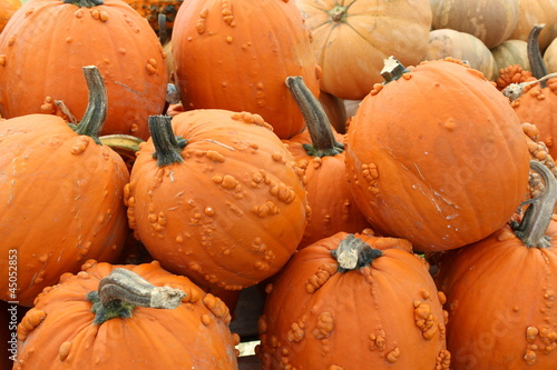 Bright and colorful knucklehead pumpkins