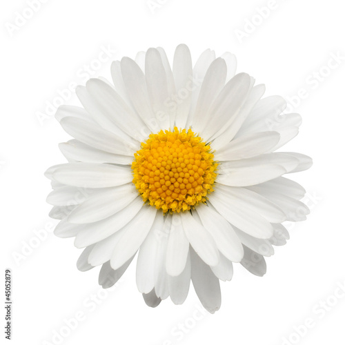 Poster Madeliefjes beautiful flower daisy