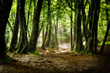 Fototapeten,holz,natur,staat,ökologie