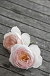 two pink roses on old wooden table