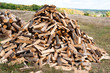 Pile of firewood in a forest
