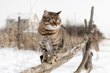Gray cat sitting on a rustic fence.