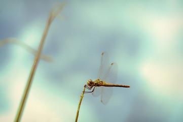 L'immobilité de la libellule