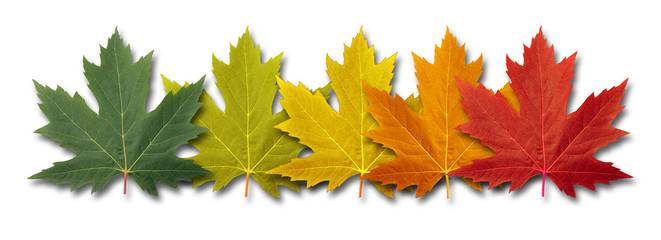 Autumn Border Element
