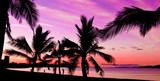 Palms silhouettes at sunset on a tropical beach
