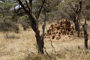 Termite mound in Kenya