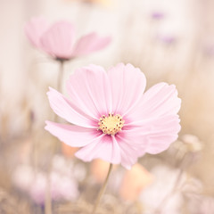 Flowers in pastel colors