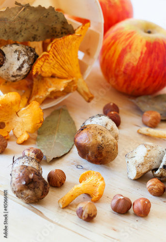 Variation of mushrooms and nuts