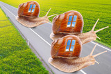 The snails with mobil home on the road.