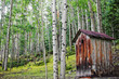 Old Outhouse Among Aspen Forest