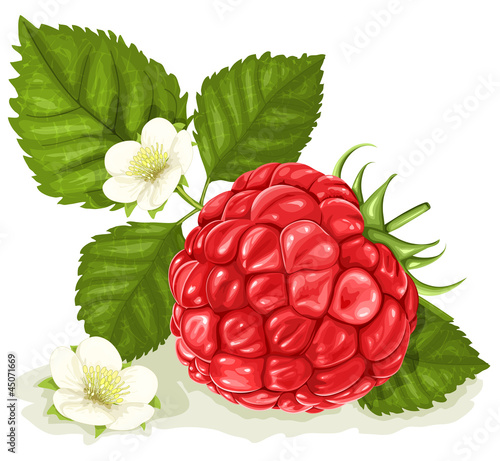 raspberry with leaves and flowers.