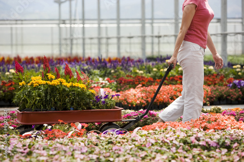 """USA, Utah, Salem, woman pulling wagon in plant nursery"""