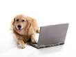 Laptop Golden Retriever