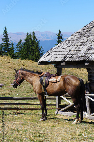 Horse in a mountain stable during a sunny day