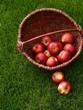 Apfel 11