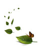 feuilles papillon