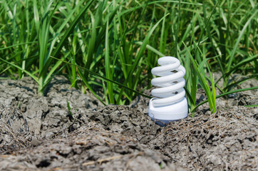 concept light bulb between drought land and green grass