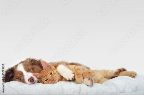 canvas print picture Hund und Katze