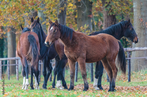 Group of four horses in autumn