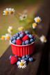 borówka amerykańska borówki maliny jagody jagoda