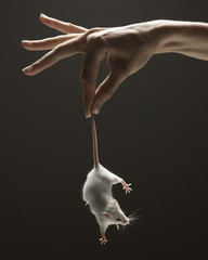 Young woman's hand holding mouse