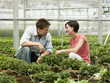 """USA, Utah, Salem, mid adult couple choosing plants in greenhouse"""