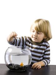 """""""USA, Utah, Provo, Boy (2-3) watching goldfish in bowl"""""""