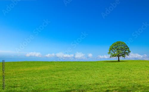 Paysage de campagne panoramique C