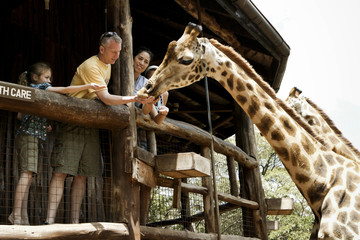 """Family feeding giraffes in Kenya, Africa"""