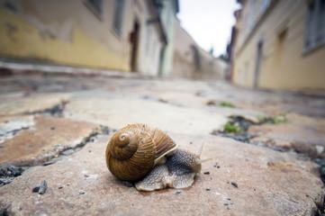 Snail on pavement