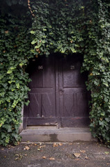 Door overgrown with ivy