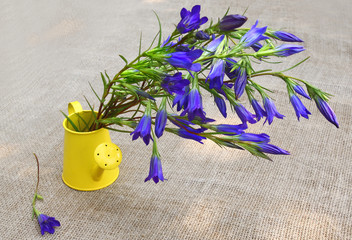 Bouquet of blue gentian