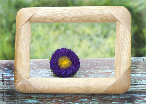 purple flower framed