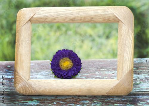 purple flower framed