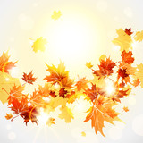 Fototapety Maple leaves background