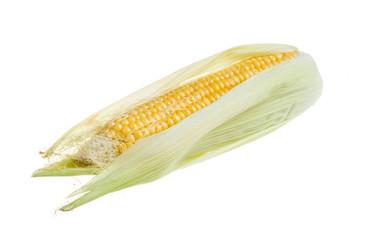 Fresh raw corn cob isolated on the white