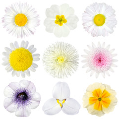 Various Collection of White Flowers Isolated on White