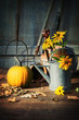 Garden shed with tools, pumpkin and flowers
