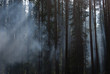Karelia. Fog in a wood