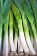 Fresh healthy bio leek on German farmer agricultural market