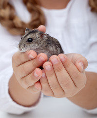 Little girl hands holding hamster