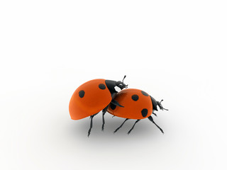 ladybirds make love isolated on white background