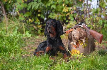 Gun dog near to shot-gun and trophy, outdoors