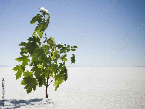 sapling sprouting in the middle of the desert