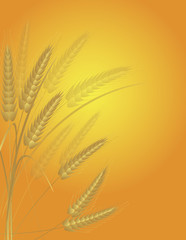 Wheat Grain Field Illustration
