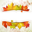White background with autumn colorful leaves