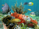 Underwater life of a coral reef