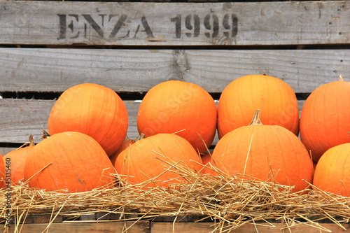 Pumpkins on Crates IV