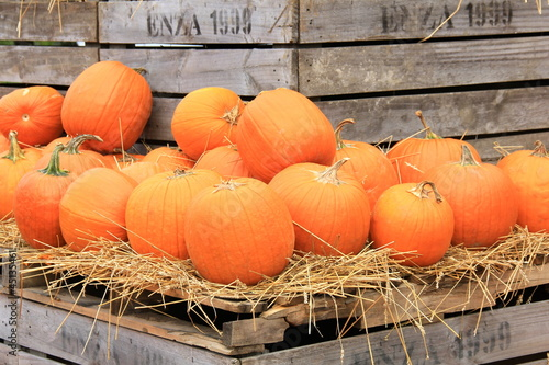 Pumpkins on Crates III
